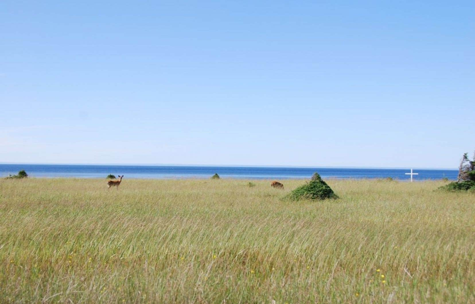 « Le tourisme, c'est la voie de l'avenir », dit une résidante de l'île. Mais un autre tourisme que celui de la SEPAQ, un tourisme d'aventure et de contemplation pour les amants de la nature épris de beauté.