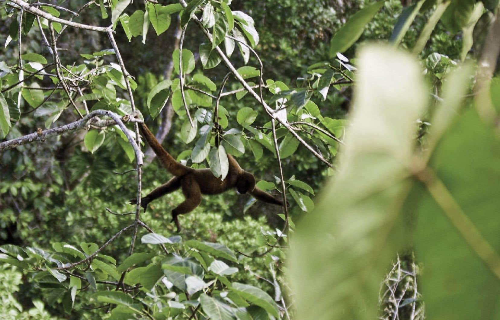 En plus de contenir la plus grande réserve de pétrole de l'Équateur, le parc Yasuni abrite plus de 200 espèces de mammifères, 250 espèces de poissons et au moins 4000 espèces de plantes à fleurs et d'arbres.