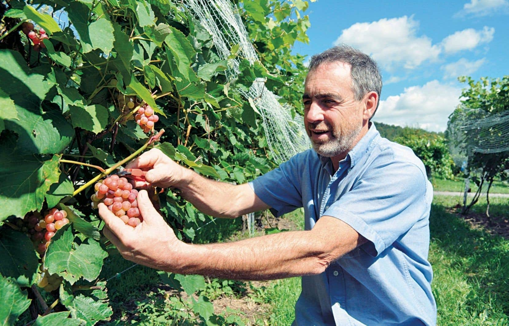 Jean-Guy Gosselin, du vignoble Coteau St-Paul à Saint-Paul-d'Abbotsford, où on cultive une quinzaine de variétés de raisins de table, cinq variétés de pommes, des poi res, des prunes, des cerises et même une parcelle encore expérimentale de kiwis et d'abricots.