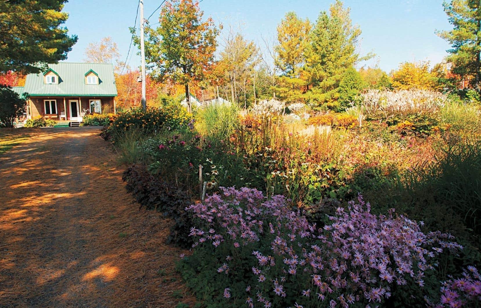 Le BRF et le précompost sont utilisés depuis de nombreuses années aux Jardins des vivaces de Charlesbourg, et les vivaces sont superbes, en santé et vigoureuses.
