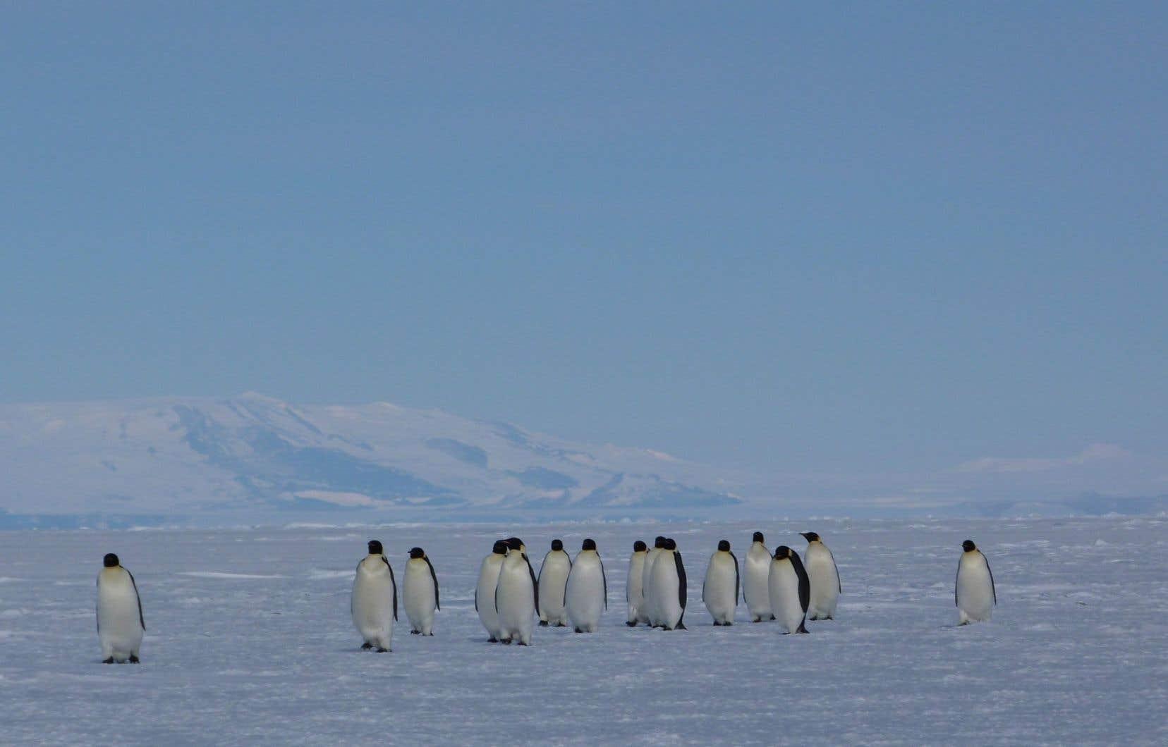 L'Antarctique est de plus en plus convoitée par différents pays. La Chine et la Russie ont d'ailleurs bloqué en novembre deux projets de création d'aires marines protégées dans la région.