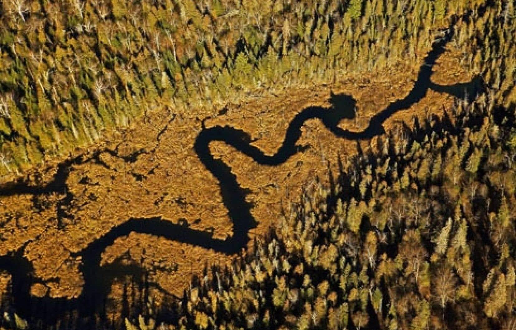 Vue sur la forêt boréale canadienne
