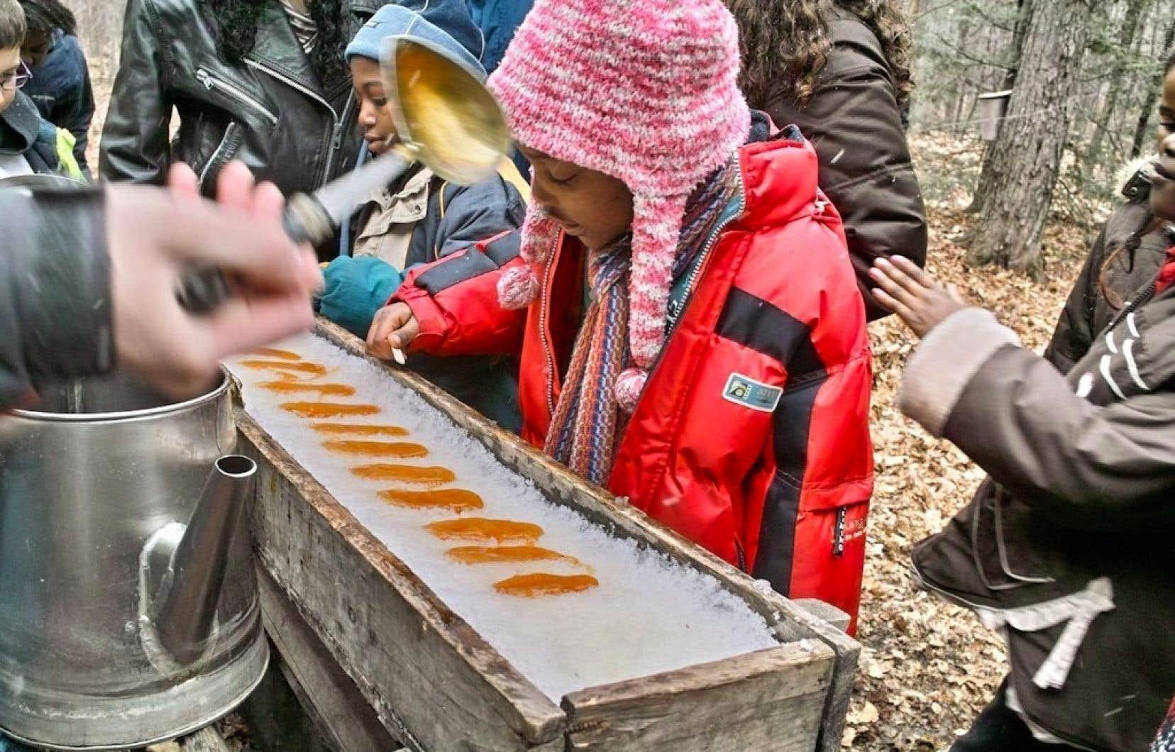 Même si le verglas d'avant Noël a fait craindre le pire aux producteurs, les petits auront quand même l'occasion de se sucrer le bec le printemps prochain dans les érablières du Québec.