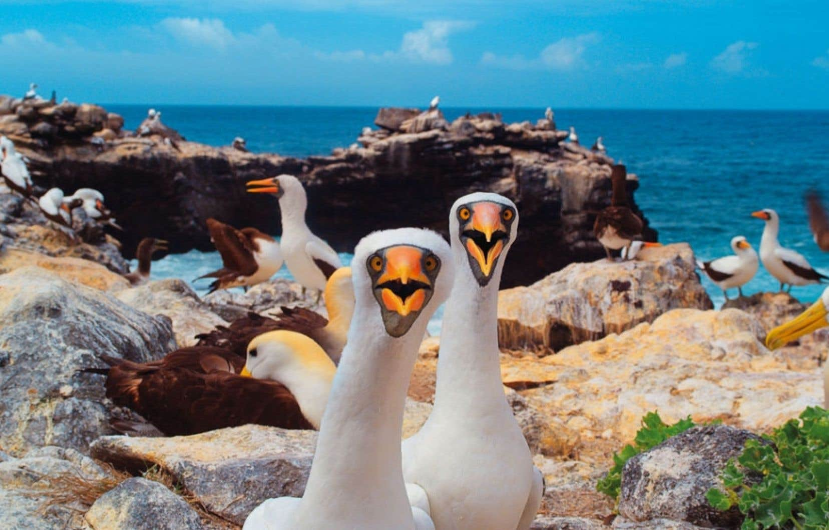 Galapagos 3D: merveilles de la nature fait découvrir quelques-unes des espèces animales des îles Galapagos.