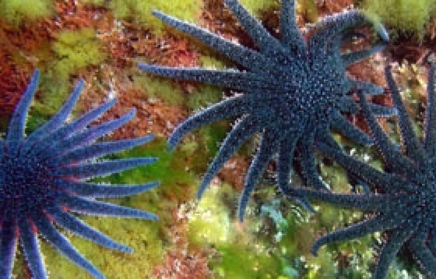 Contrairement aux espèces terrestres, les espèces marines réagissent en moins de quelques mois aux changements les plus infimes de la température des océans.