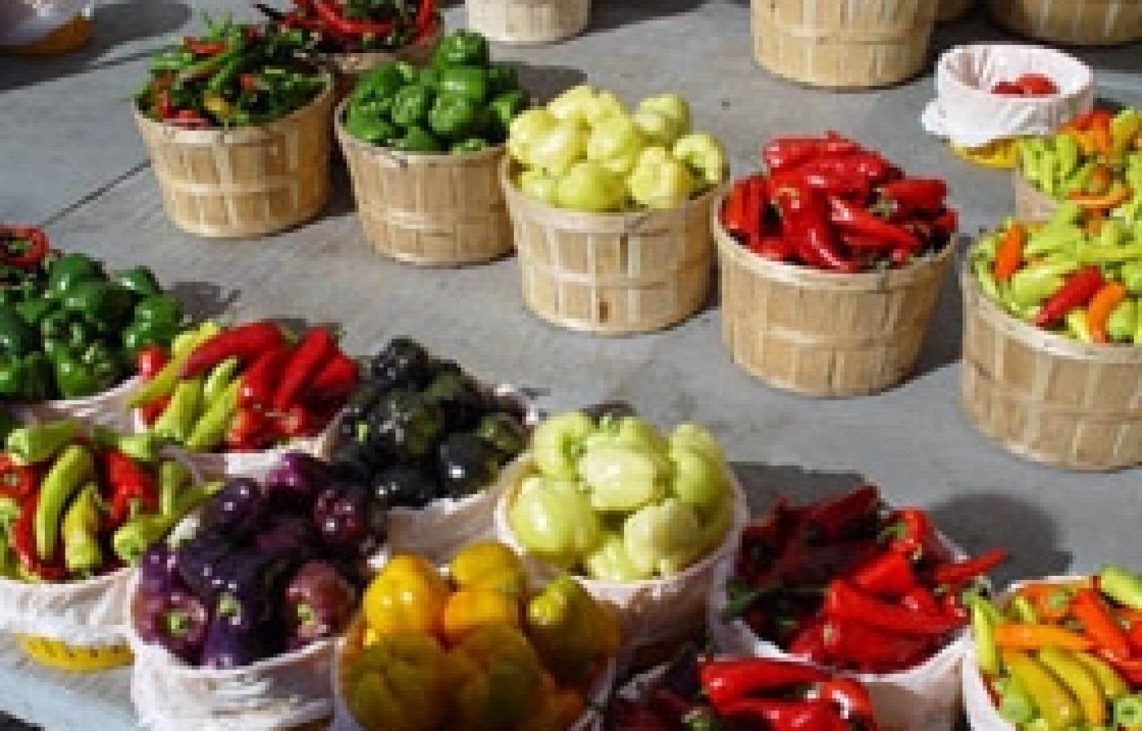 Fruits et légumes sont essentiels dans une saine alimentation. Avec un peu de débrouillardise, on peut parvenir à bien manger, même quand on est démuni, en déterminant, par exemple, à quel moment acheter le meilleur produit au meilleur prix et à