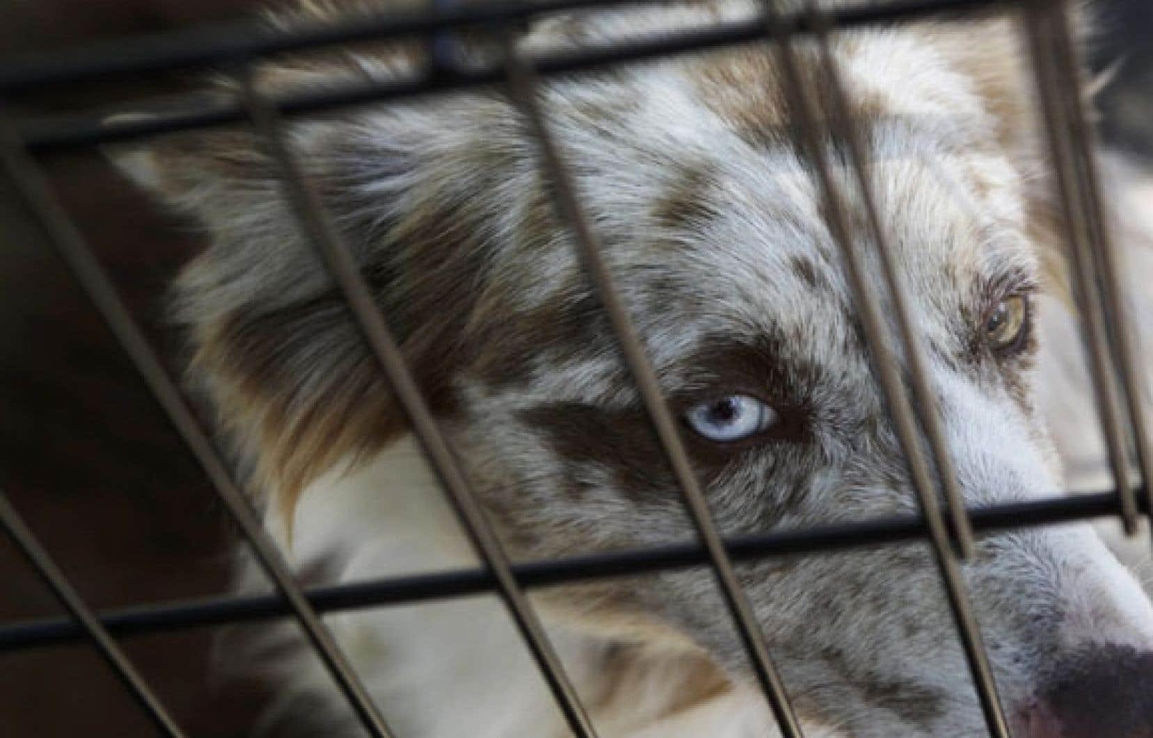 Des sites Web regorgent de chiens à vendre malgré la surpopulation des refuges.