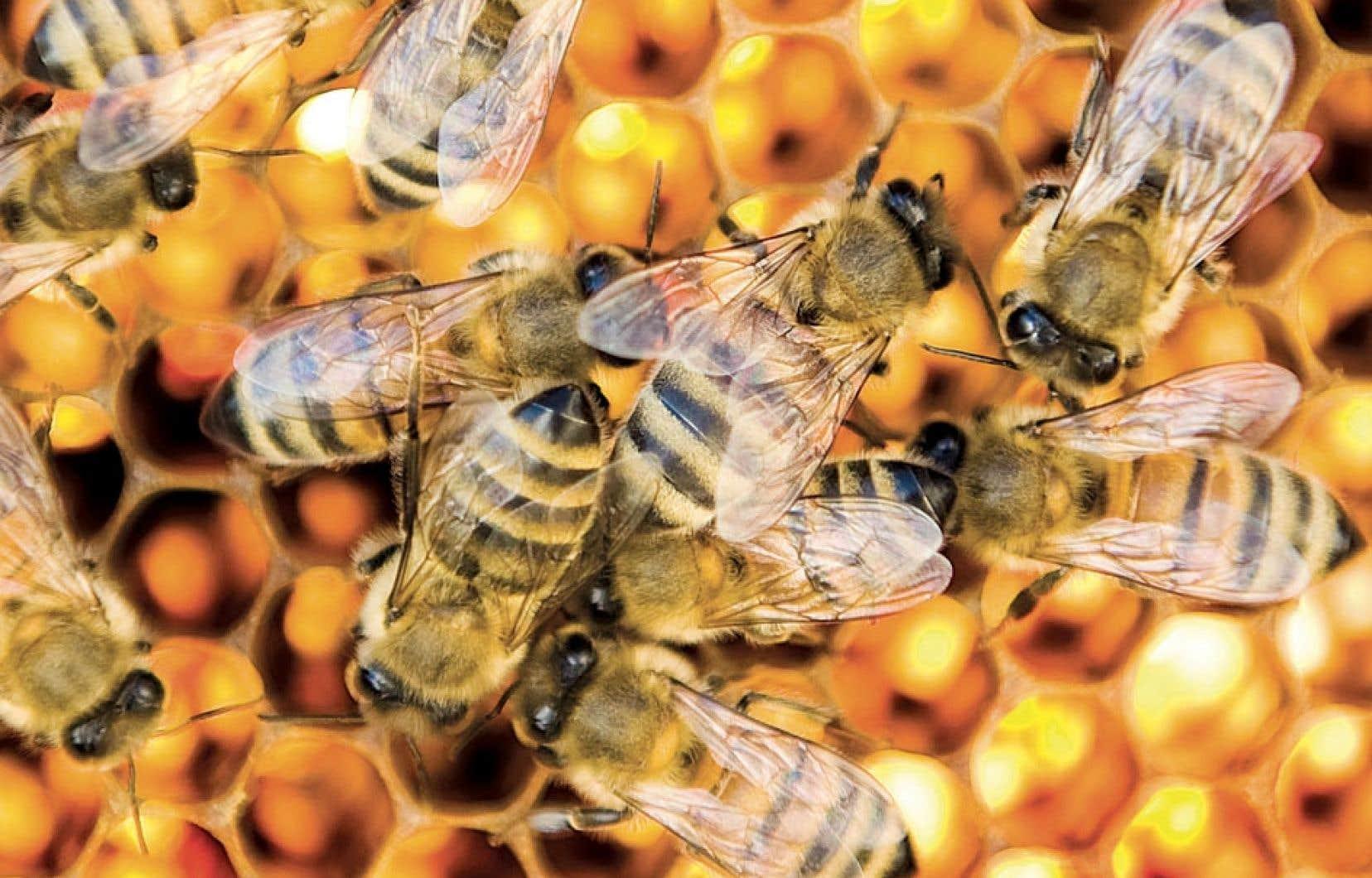 Les pesticides ont non seulement des effets néfastes sur les populations d'abeilles, mais aussi sur les papillons, les vers de terre, les oiseaux et les poissons.