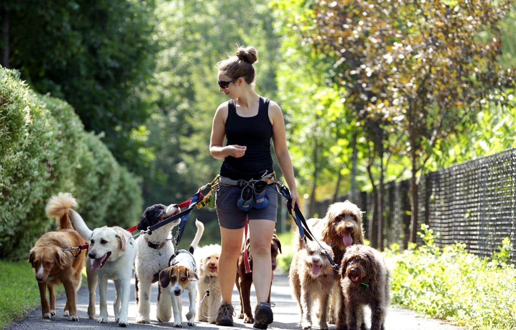 Émilie Rivard, promeneuse de chiens, et sa bande. Sa compagnie, Chien Sourire, a adopté Runmeter, une application mobile permettant d'enregistrer l'activité physique que font les chiens qu'on lui confie.