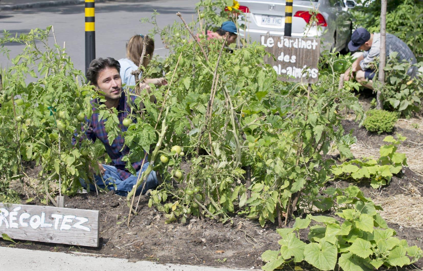 À l'angle des rues Drolet et Beaubien à Montréal, le Jardinet des mal-aimées offre sa récolte aux résidants de Rosemont depuis juin 2013.