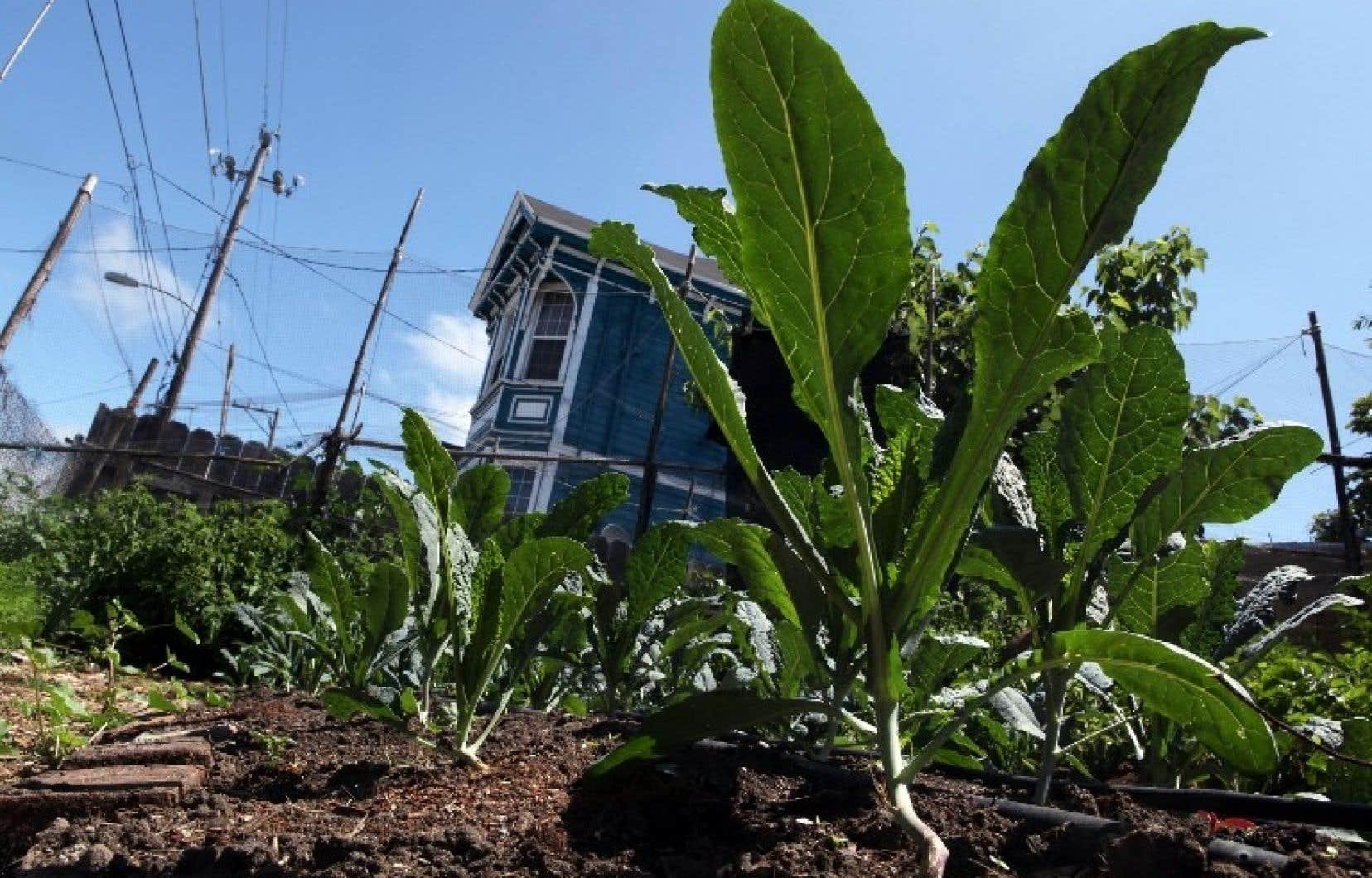 A Oakland en Californie l'organisme City Slicker Farm a créé des jardins de légumes pour les familles démunies.
