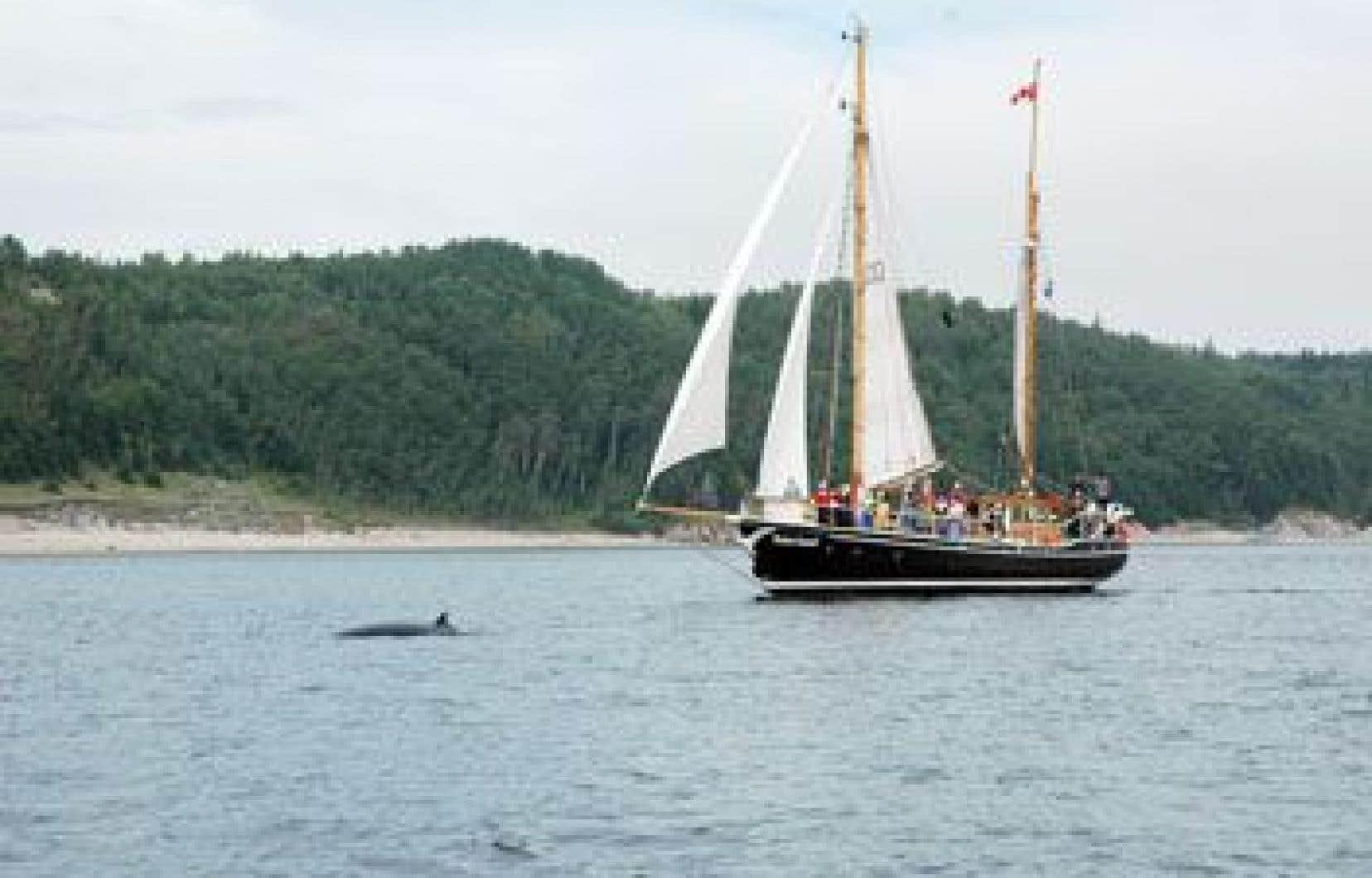 Le Roter Sand sillonnera le Saint-Laurent dans le cadre du Symposium nomade des océans pour sensibiliser la population au fleuve et à sa biodiversité à préserver.
