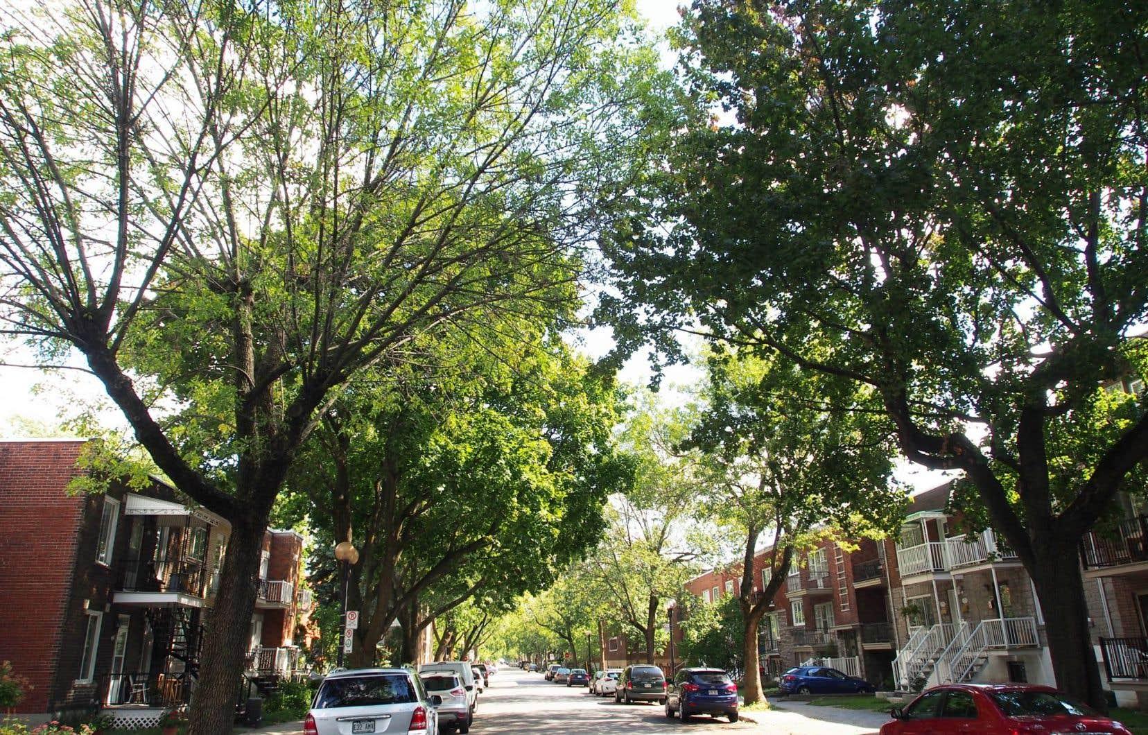Une taille respectueuse de l'architecture de l'arbre permettrait de conserver celui-ci en santé, il vivrait plus vieux et les coûts d'intervention seraient diminués.