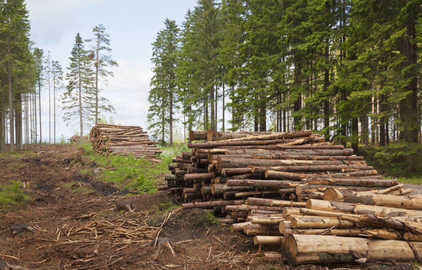 Le Québec peut se montrer très fier des résultats obtenus par son industrie forestière.