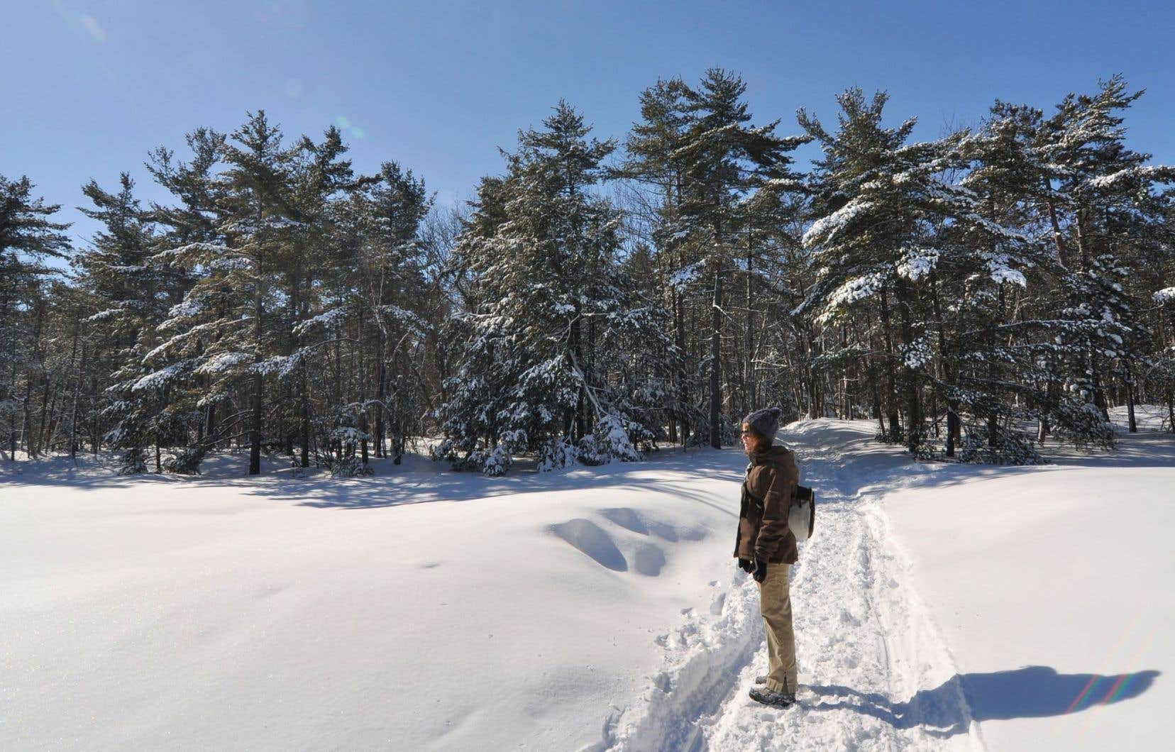 Actuellement, le Québec au sud de la limite des forêts dites «exploitables» ne compte qu'à peine 5% d'aires protégées.