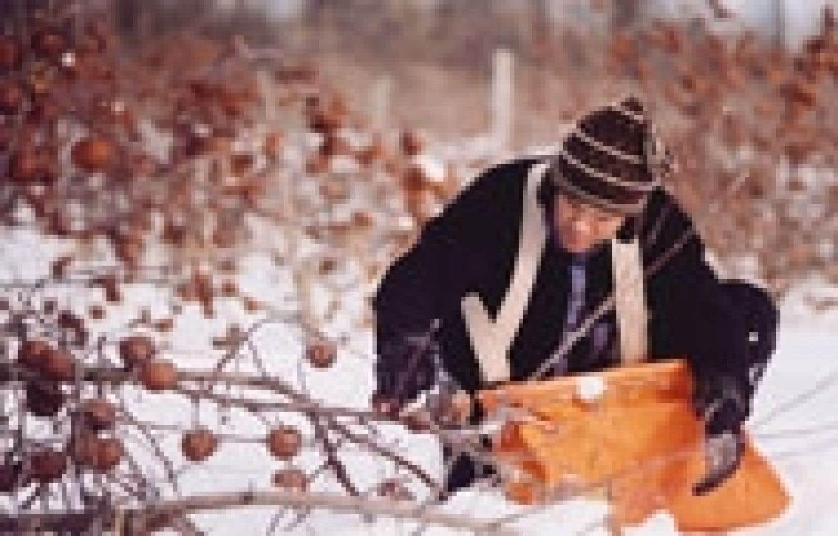 Récolte, à Hemmingford, de pommes en vue de produire du cidre de glace, l'un de ces alcools du terroir qui souffre du monopole de la SAQ.