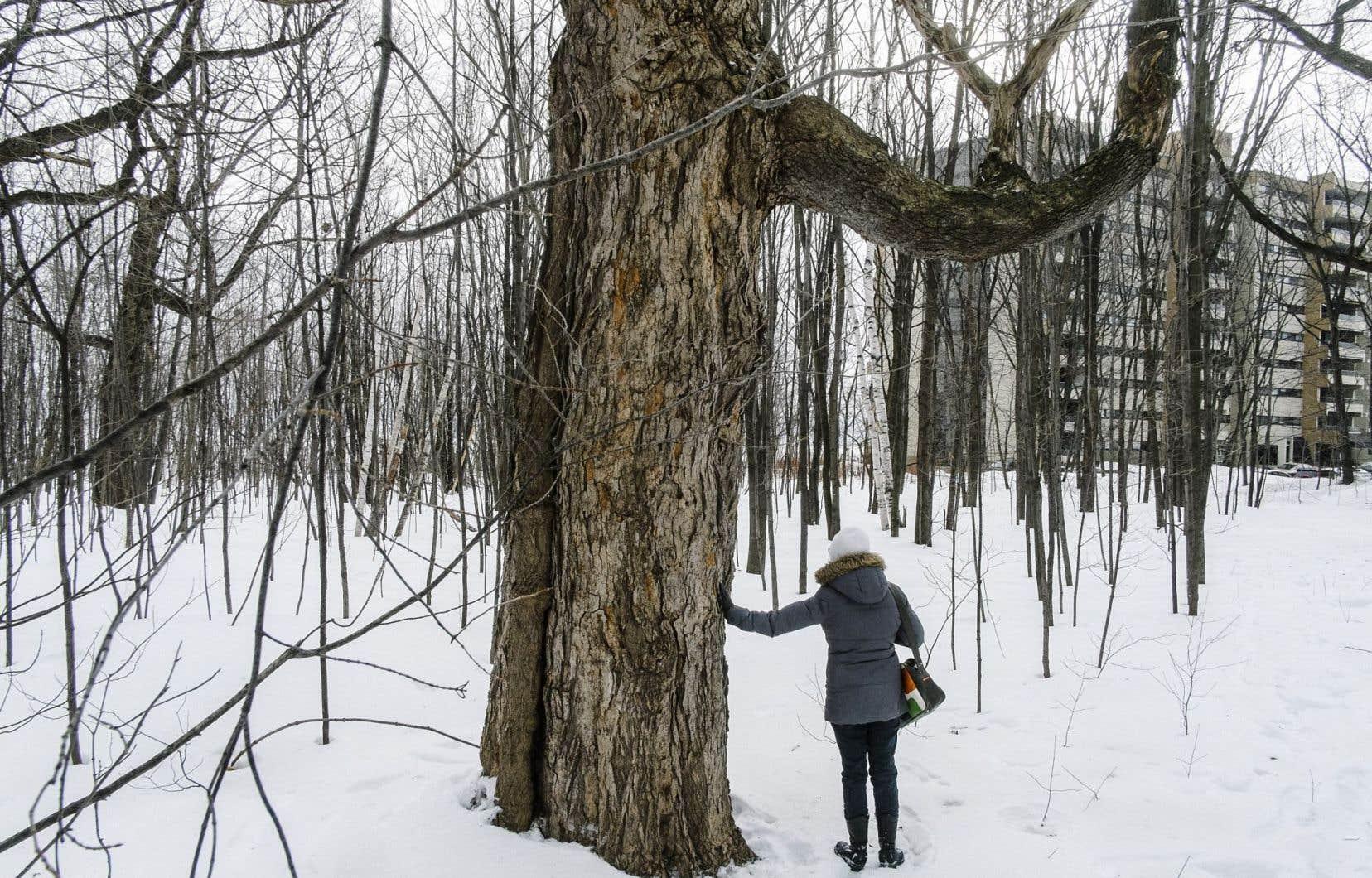 En 2013, le projet immobilier du boisé Woodfield, aussi à Sillery, avait fait grand bruit.
