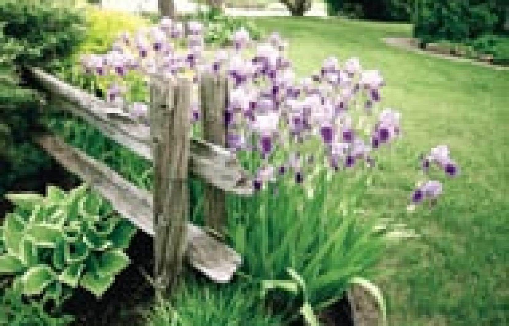 Jardins le truc du jardinier pour de beaux iris le devoir for Jardins de jardiniers