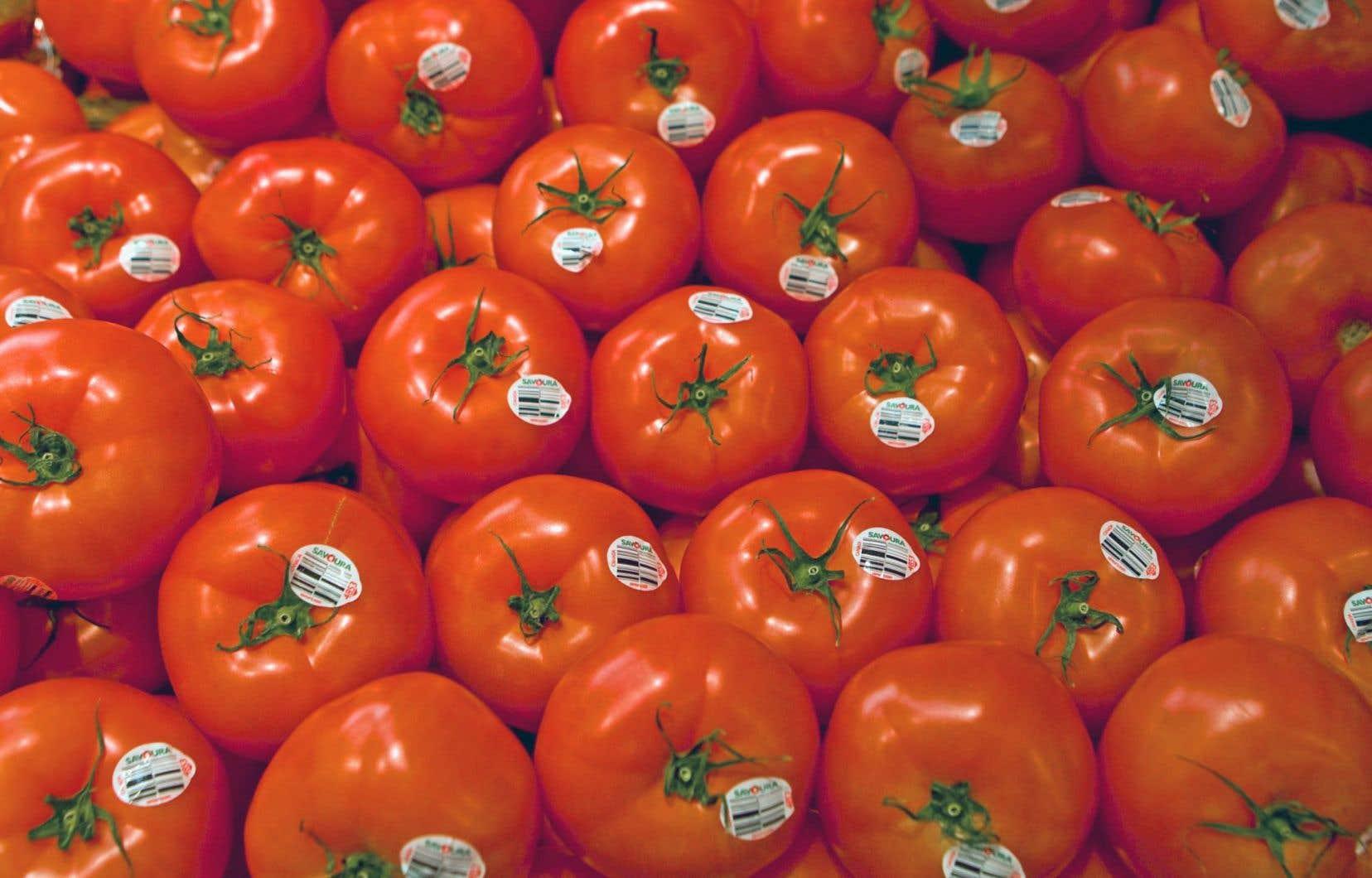 Productions Horticoles Demers produit, outre des tomates, des fraises, des framboises, des poivrons et des aubergines.<br />