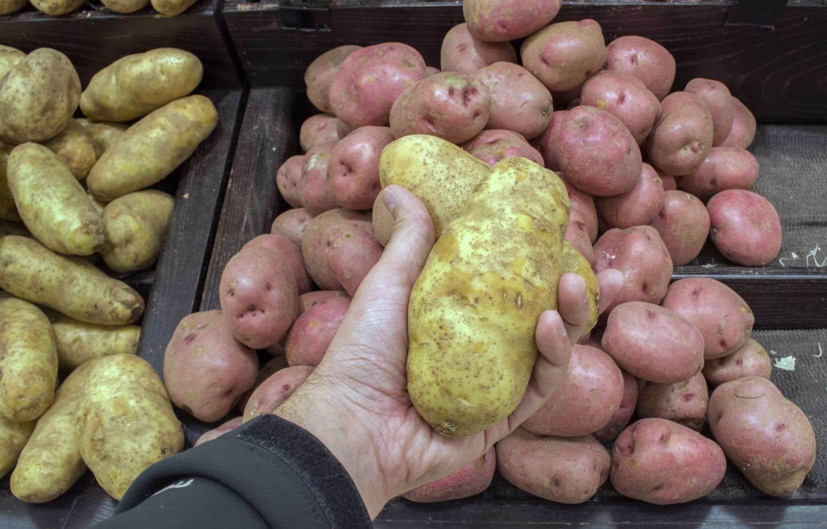 La découverte offre de nouvelles stratégies pour reproduire une résistance élargie et durable dans les variétés de pommes de terre.