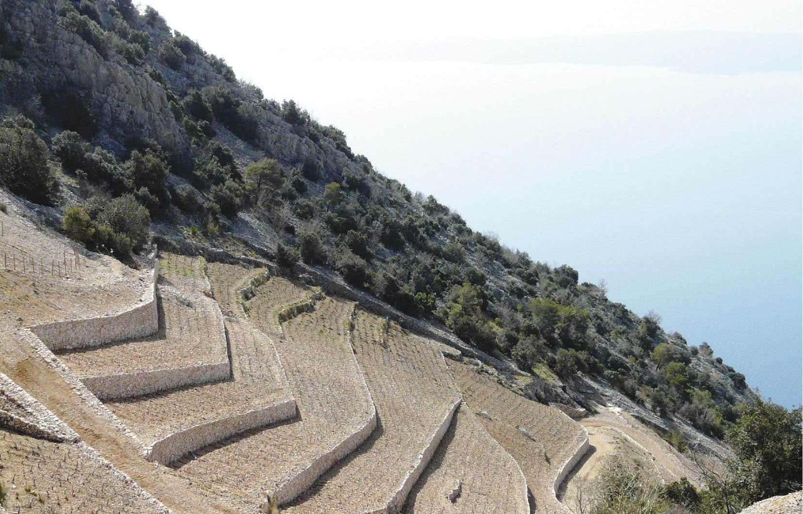 Des terrasses sur l'île de Brac (côte sud en face de l'île Hvar) qui n'ont rien à envier à celles du Douro ou de la Côte Rôtie.