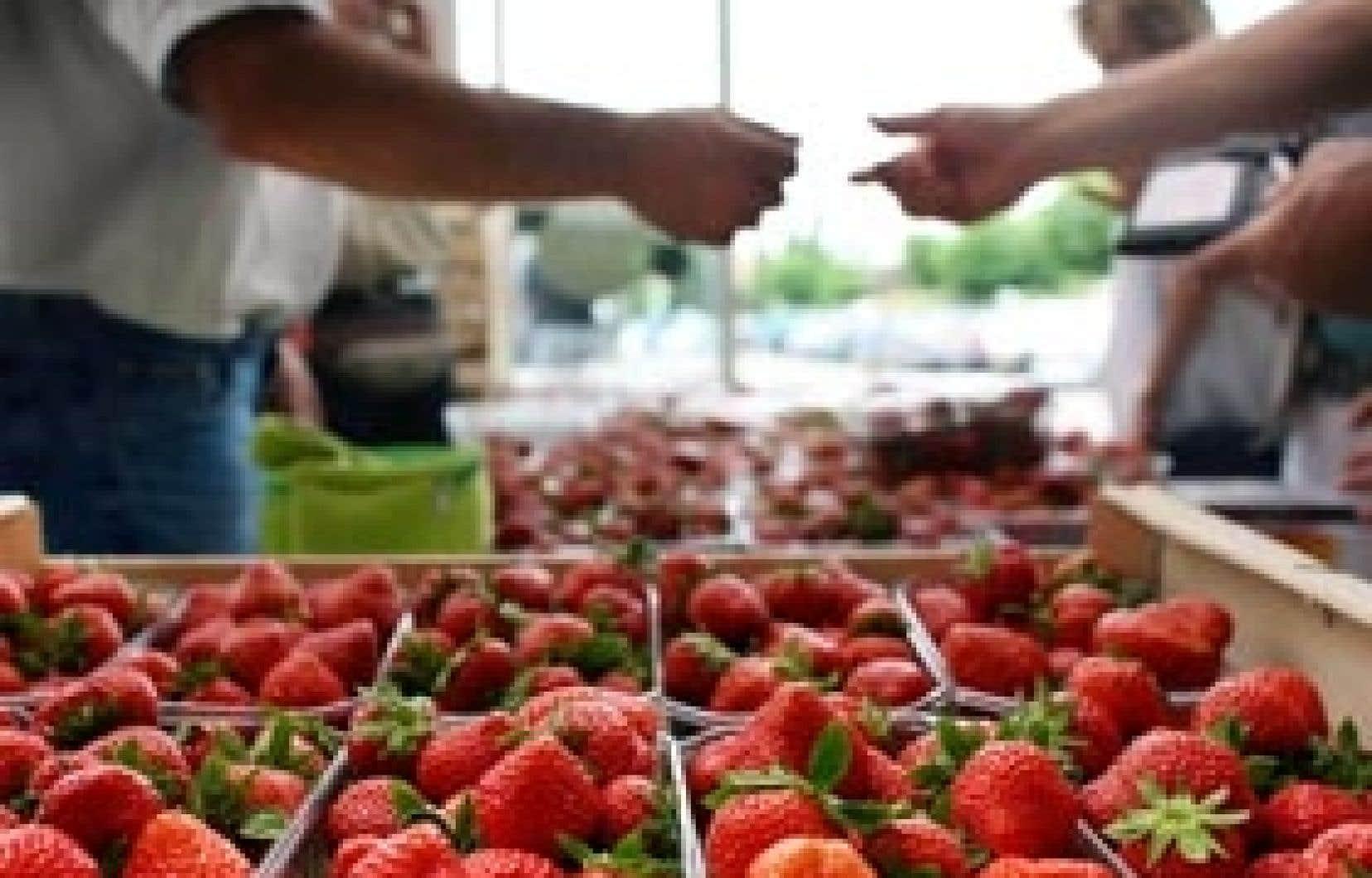 FraiseBec vend ses produits à toutes les fruiteries du Québec, aux marchés publics et même aux kiosques de ferme.