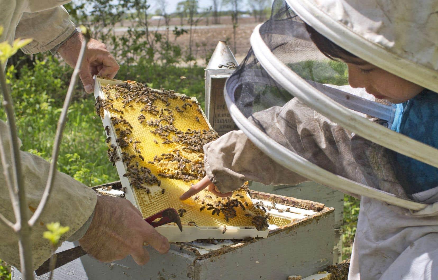 Globalement, les abeilles sont responsables, par leur pollinisation, de plus d'un tiers de notre alimentation.