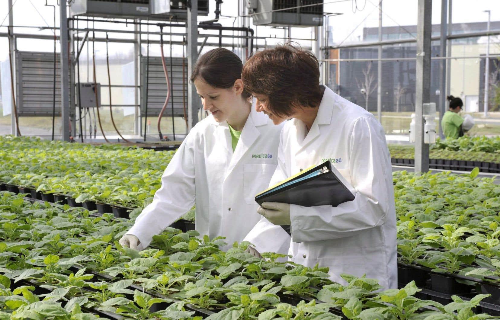 Medicago se spécialise dans la fabrication de vaccins et de traitements thérapeutiques à base de plantes.