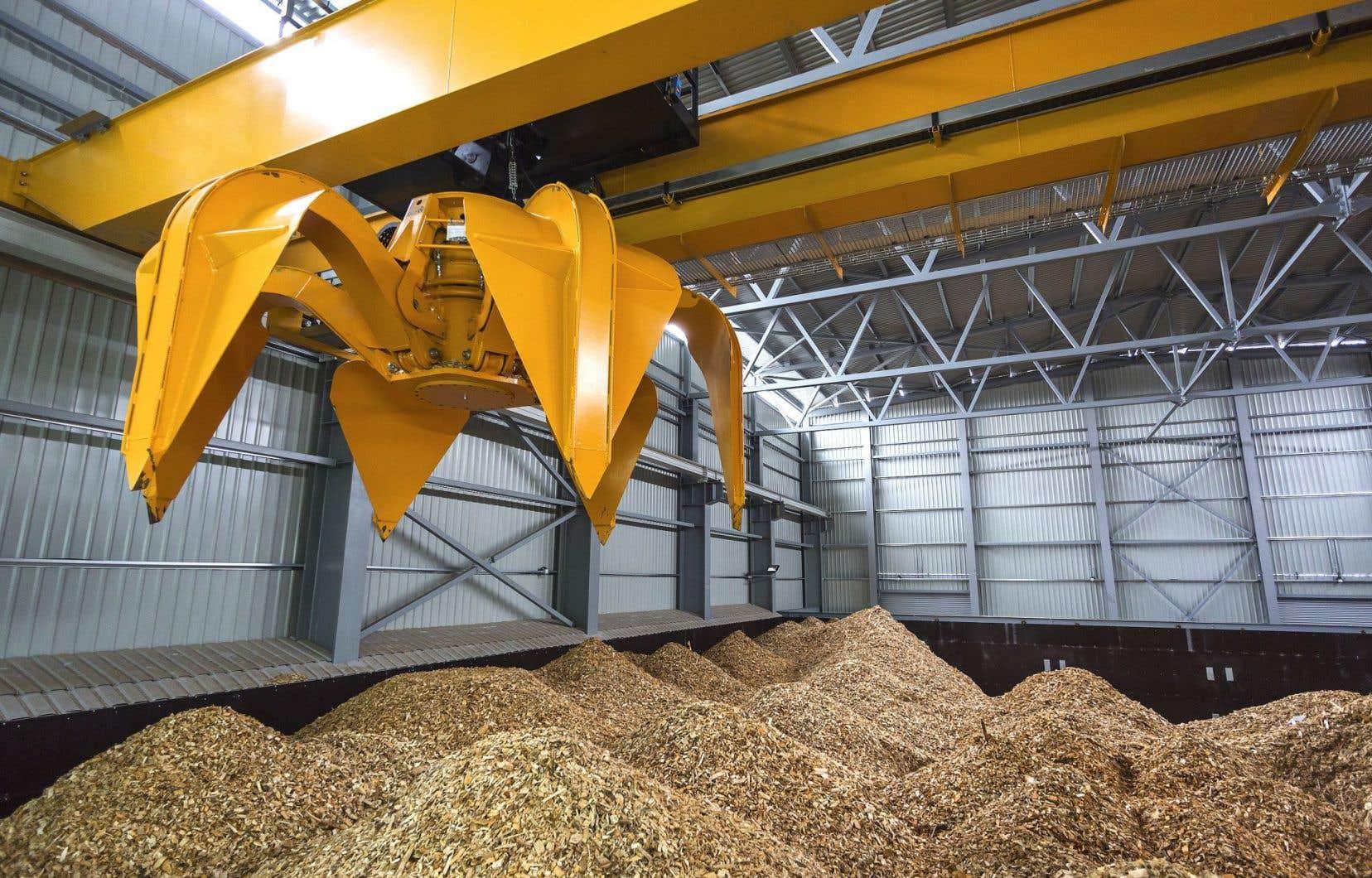 Les perspectives ne manquent pas pour la biomasse, mais l'économie tarde à tirer profit de la ressource forestière.