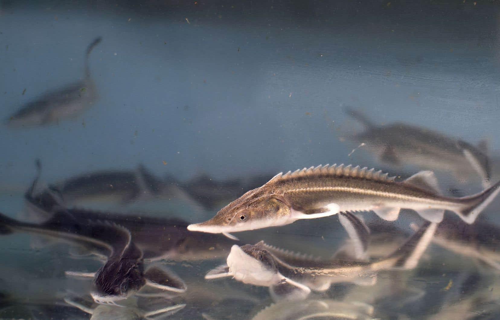 Les plantes pourraient produire des oméga-3 que seuls les poissons produisent.