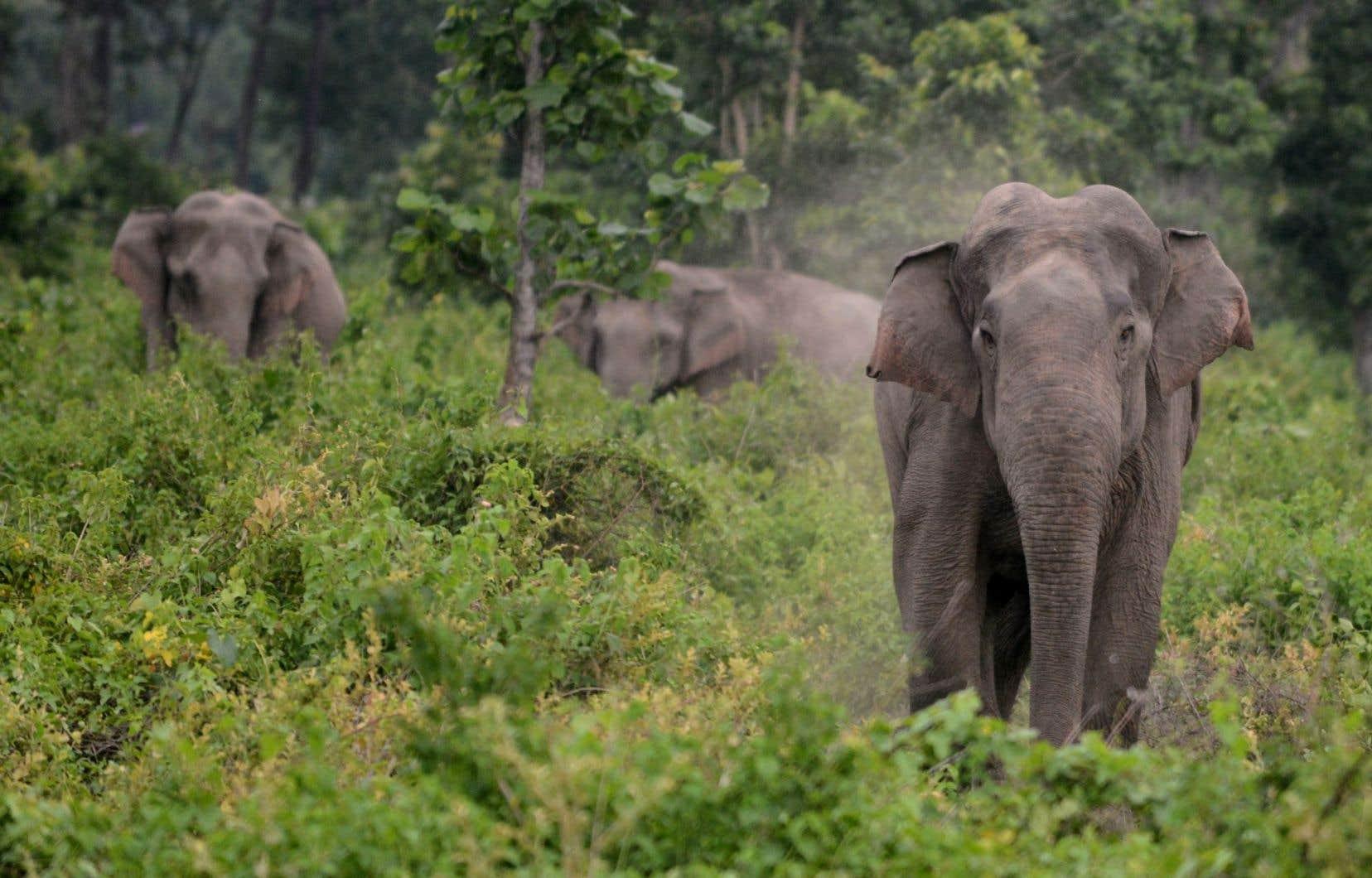 L'empathie s'est développée chez certains animaux, dont les éléphants, parce qu'ils vivent dans des sociétés dont le fonctionnement commande l'entraide entre leurs membres.