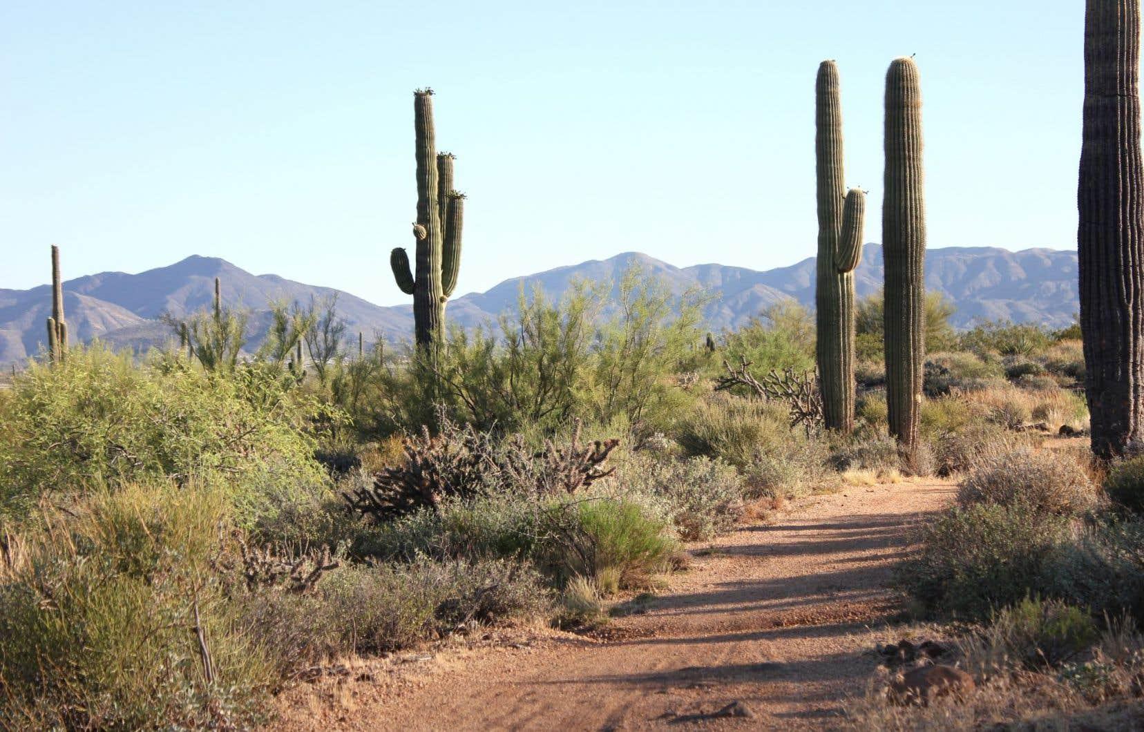 Au programme: randonnée dans la chaleur désertique au cœur du paysage cinématographique de Brown's Ranch, dans le McDowell Sonoran Preserve, un parc protégé de 30000 acres.