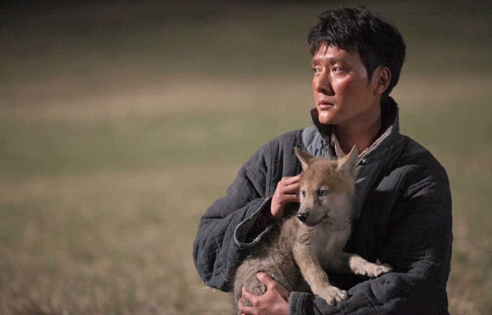 Rarement a-t-on pu voir des hordes de loups d'aussi près filmées.