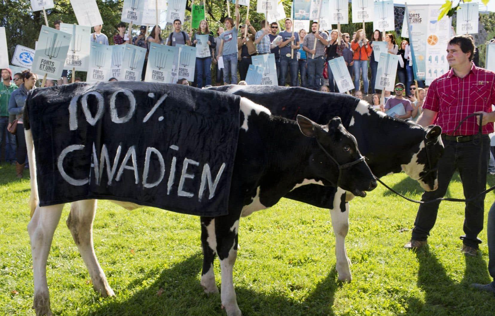 Des agriculteurs inquiets des dispositions du Partenariat transpacifique ont manifesté avec leur bétail.