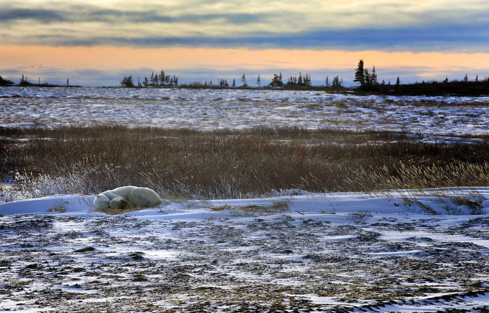 Churchill, près de la baie d'Hudson, dans la province du Manitoba