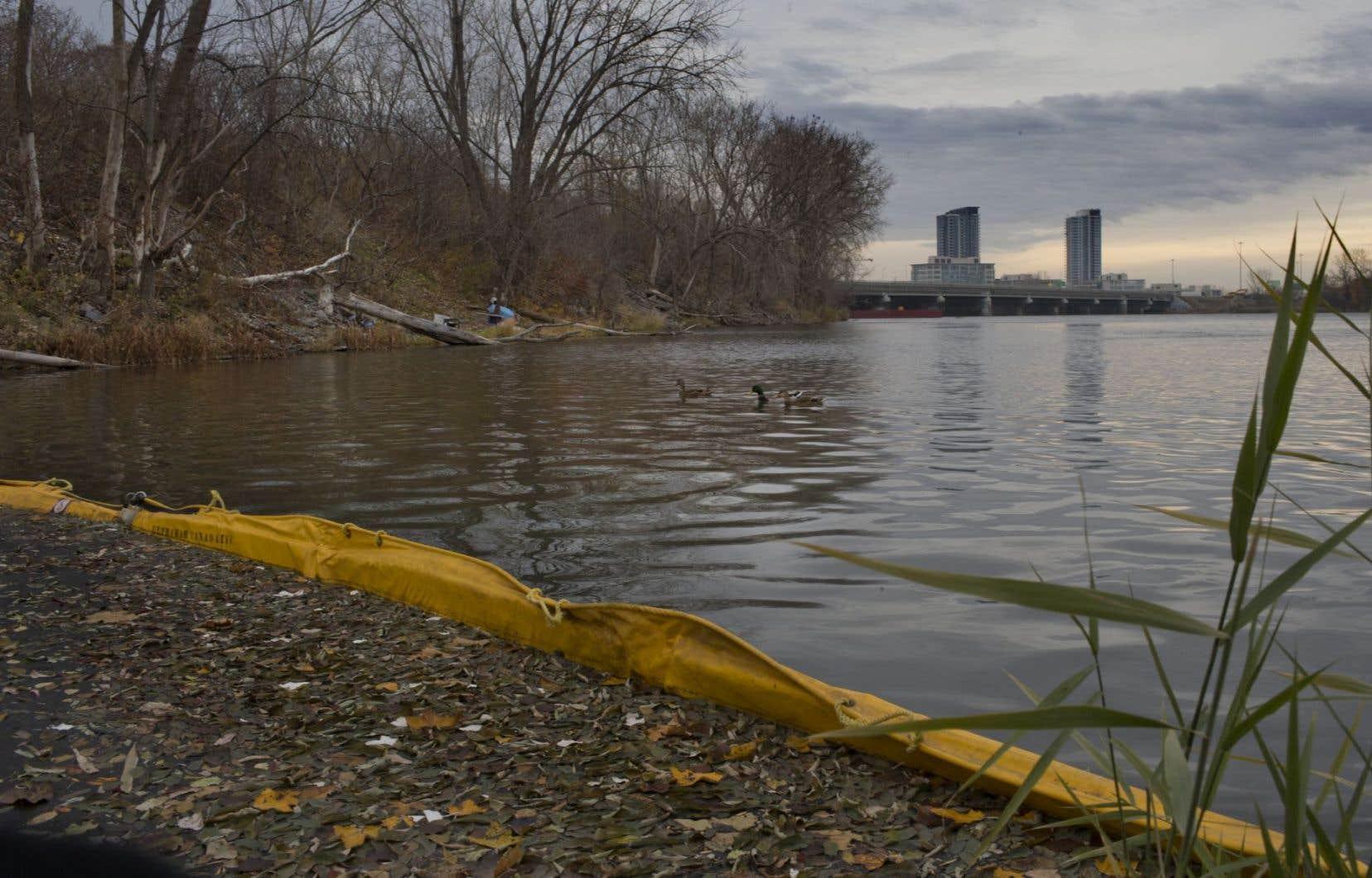 <p>La Ville de Montréal a notamment installé une barrière flottante près des rives de Verdun pour limiter la dispersion des matières. De la berge mercredi matin, les odeurs des rejets sanitaires étaient perceptibles.</p>