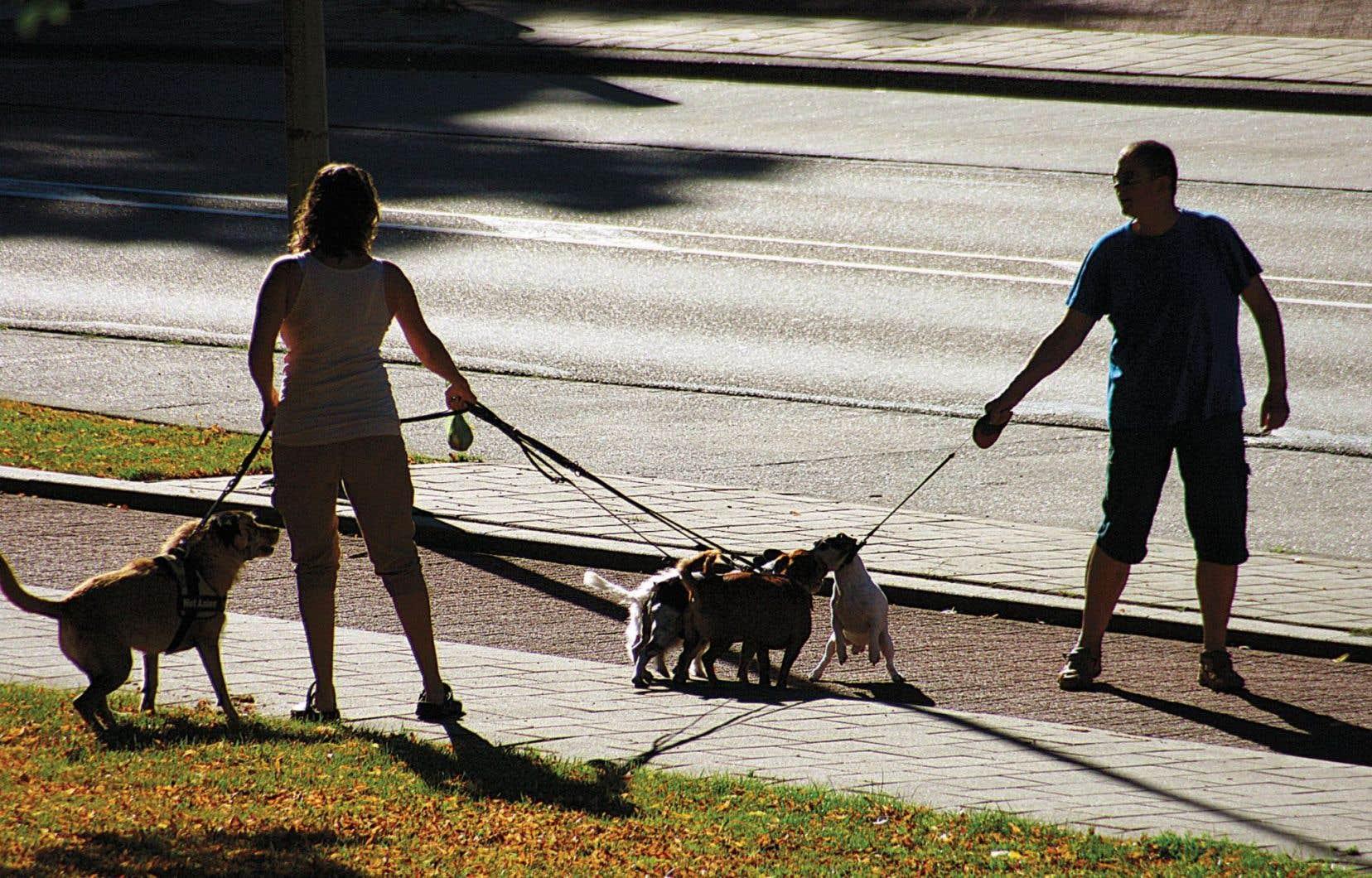 De plus en plus de sites investissent cette niche où l'animal domestique se fait l'intermédiaire dans la rencontre humaine.