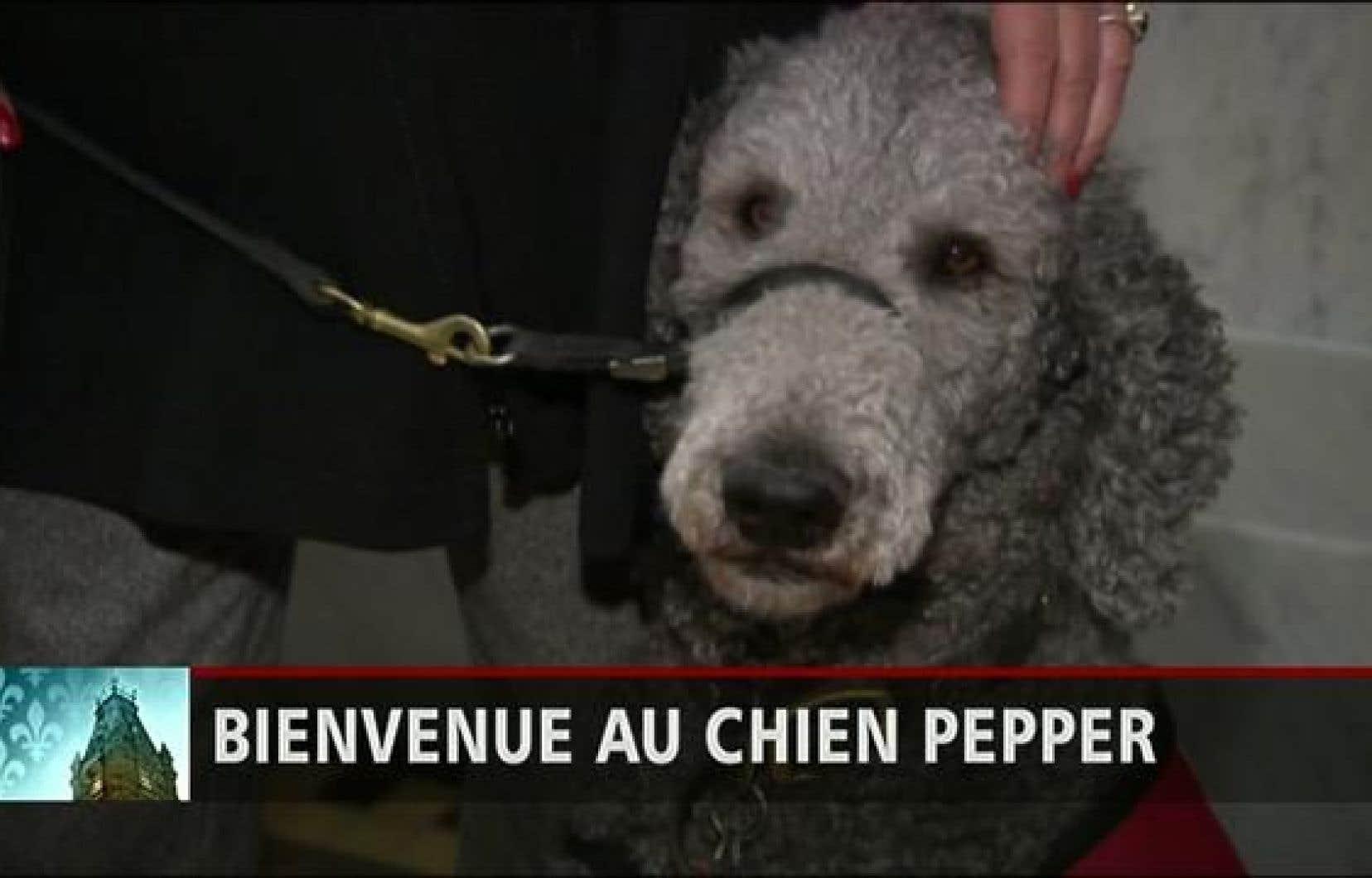 Pepper, le chien de la députée caquiste Claire Samson