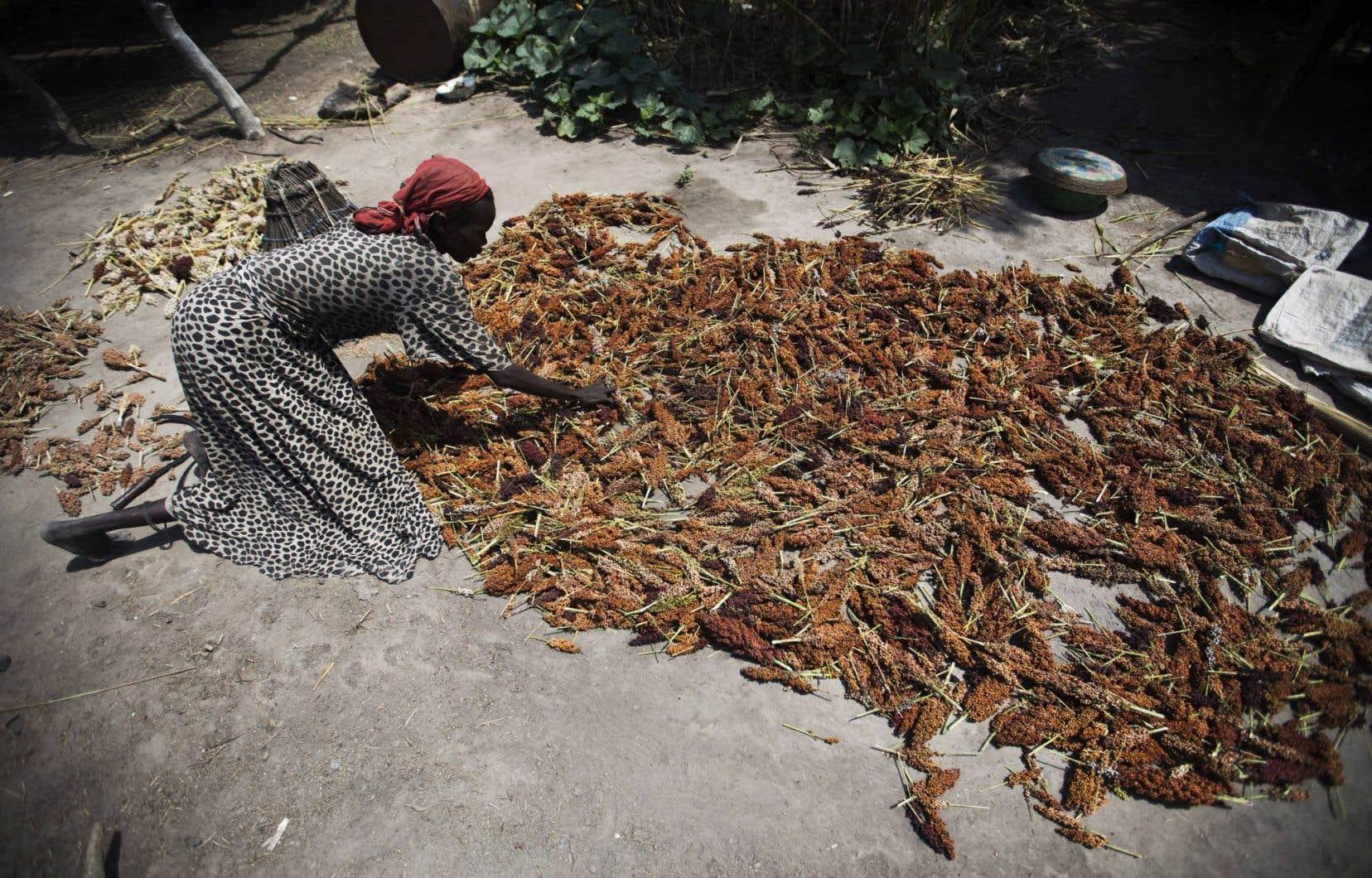 Une femme sèche du sorgum au Sud-Soudan, en octobre dernier.