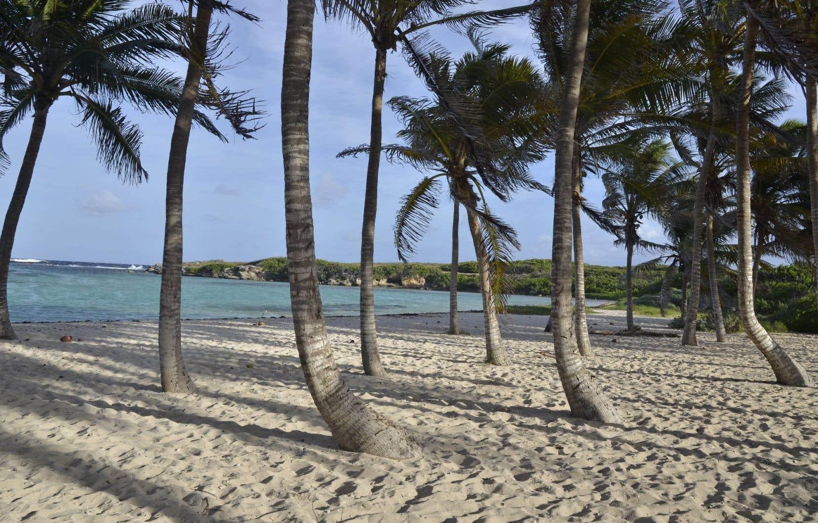 Une plage de cocotiers dans la réserve naturelle de l'îlet Petite-Terre, à La Désirade