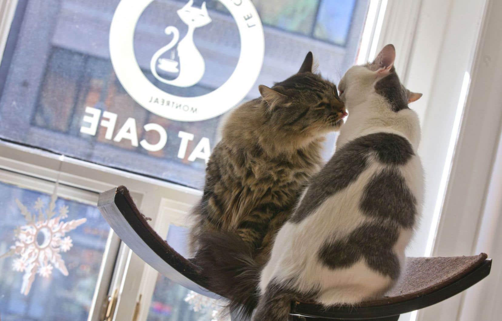 Indifférents au spectacle de la rue, les vedettes du Café des chats sont juchées au sommet du monde et affectionnent leurs semblables, épris de liberté.
