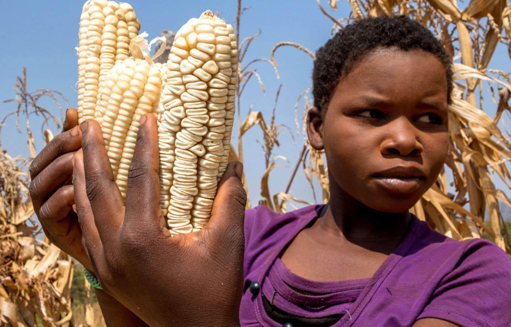 Le quart des Zimbabwéens sont en situation d'insécurité alimentaire, soit 2,44 millions de personnes.
