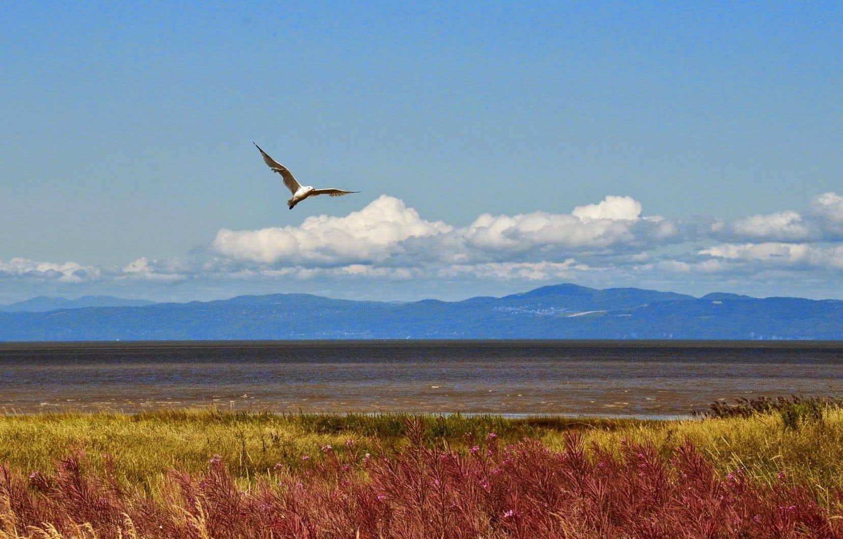 Le Québec s'était engagé à protéger 12% de son territoire d'ici 2015, puis 17% d'ici 2020. Le Bas–Saint-Laurent (notre photo) accuse toutefois un retard, avec seulement 4,5% d'aires protégées.