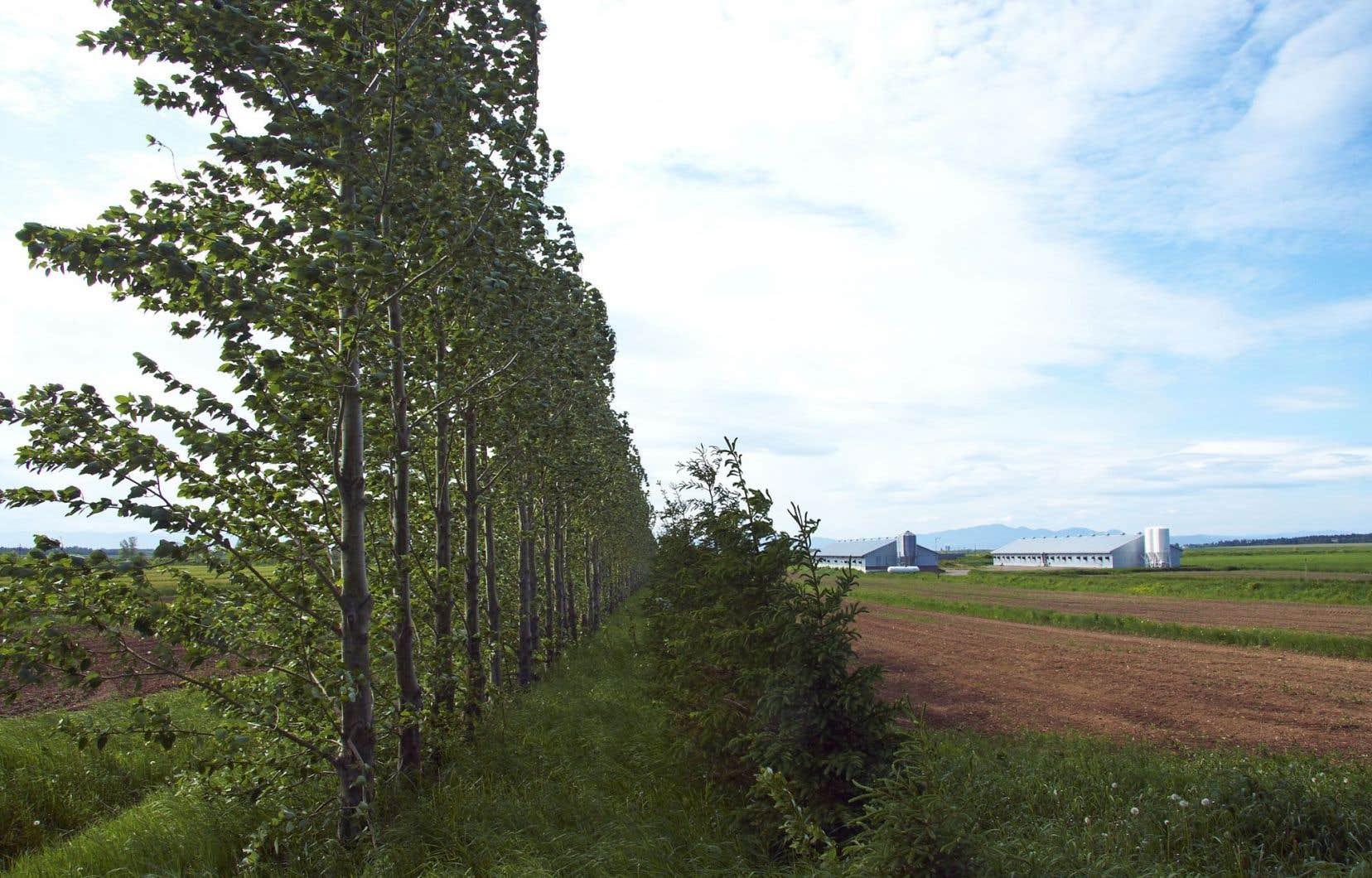 La plantation de haies brise-vent protège, entre autres, de l'érosion des sols.