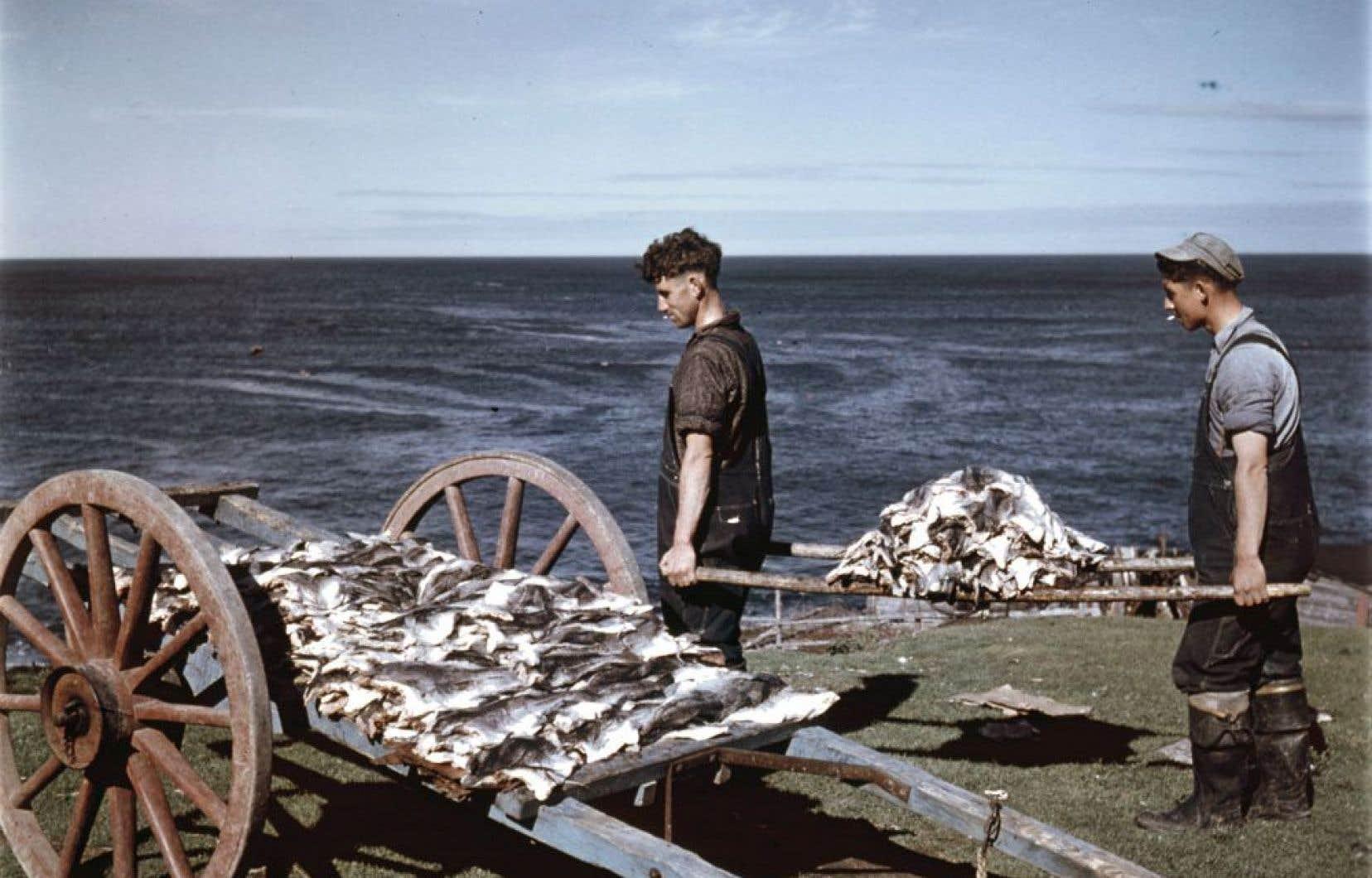 Pêcheurs de Terre-Neuve transportant de la morue, octobre 1948.