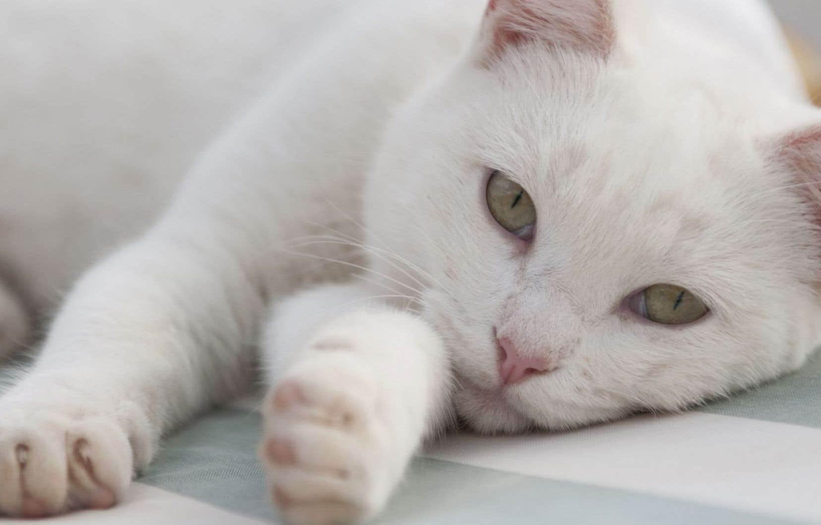 «La biographie complète et définitive de Byeli, matou du Nebraska» raconte le destin d'un chat tout blanc trouvé par l'auteur.