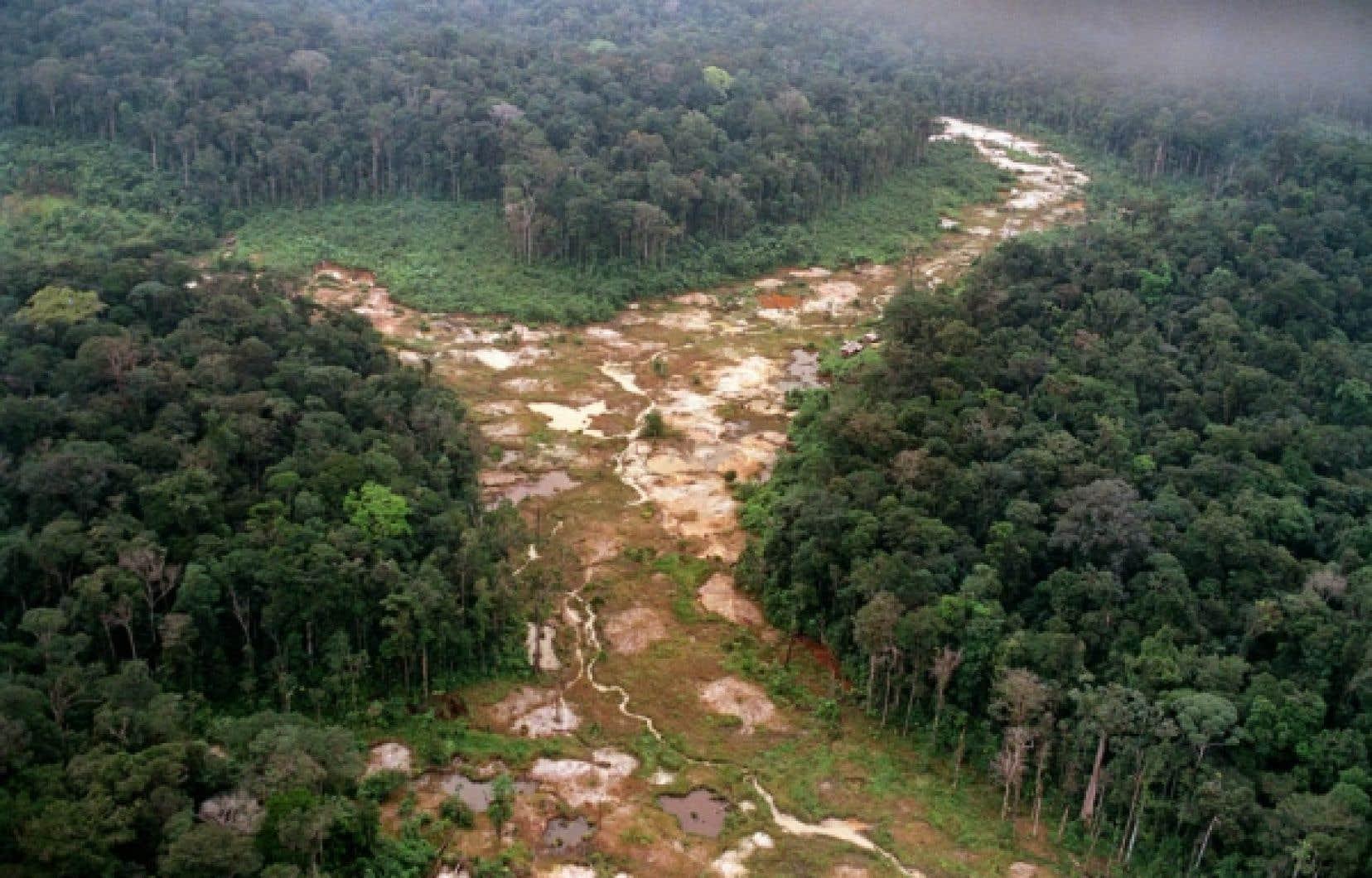 Coupe partielle dans la forêt amazonienne.