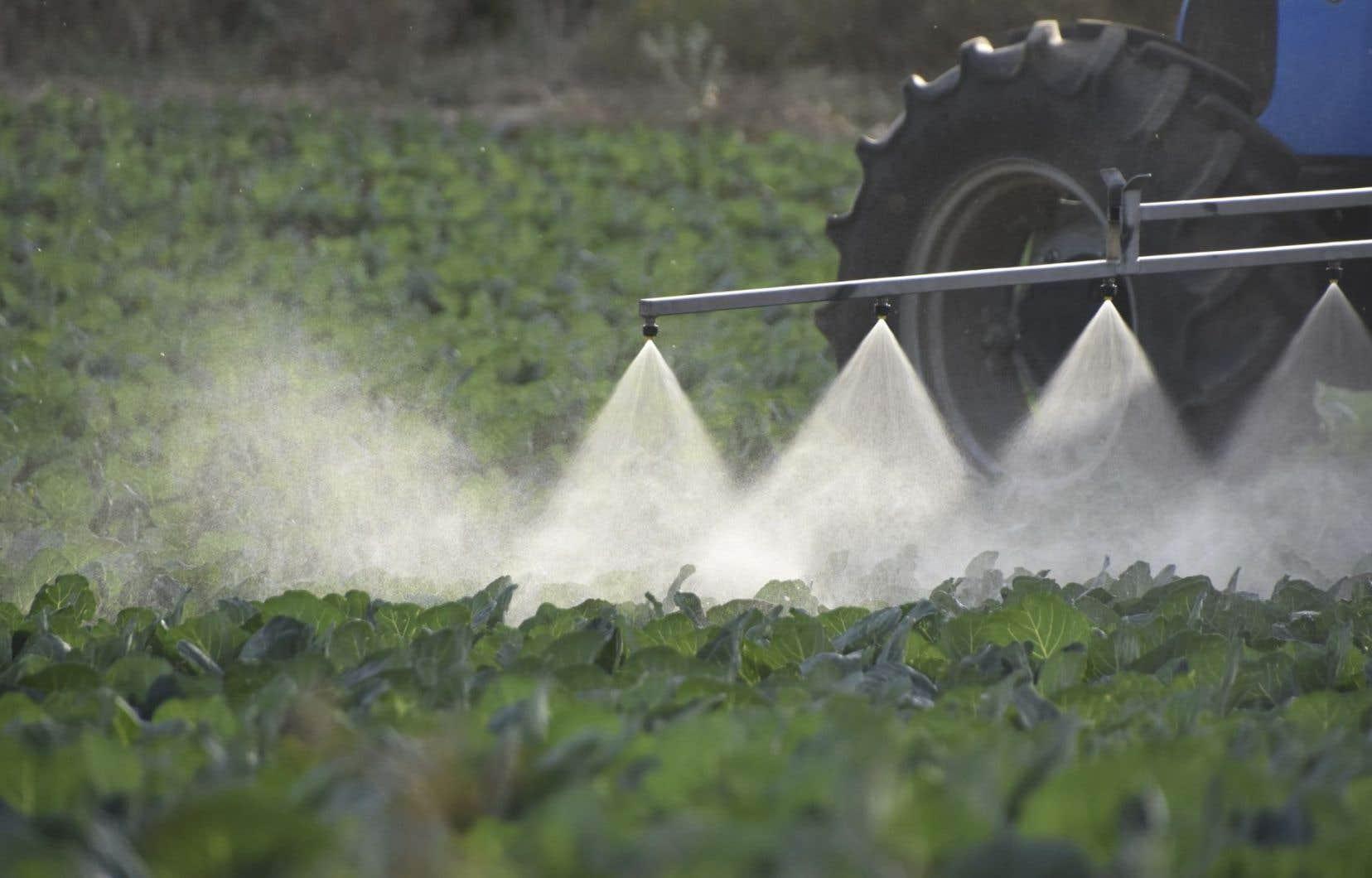 Le manque de contrôle sur l'utilisation des pesticides, notamment, est problématique.