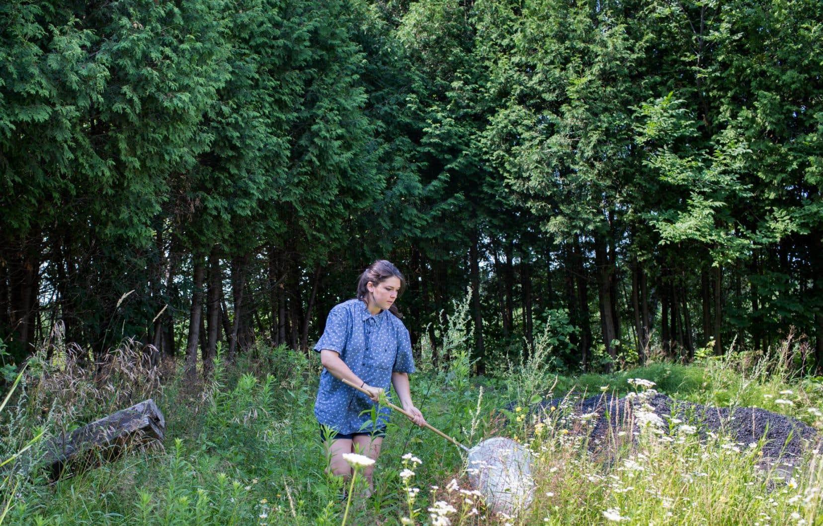 Les étudiants qui accompagnent le chercheur Jacques Brodeur ratissent un espace naturel du mont Saint-Bruno avec leurs filets dans le but de récolter des échantillons des insectes présents.