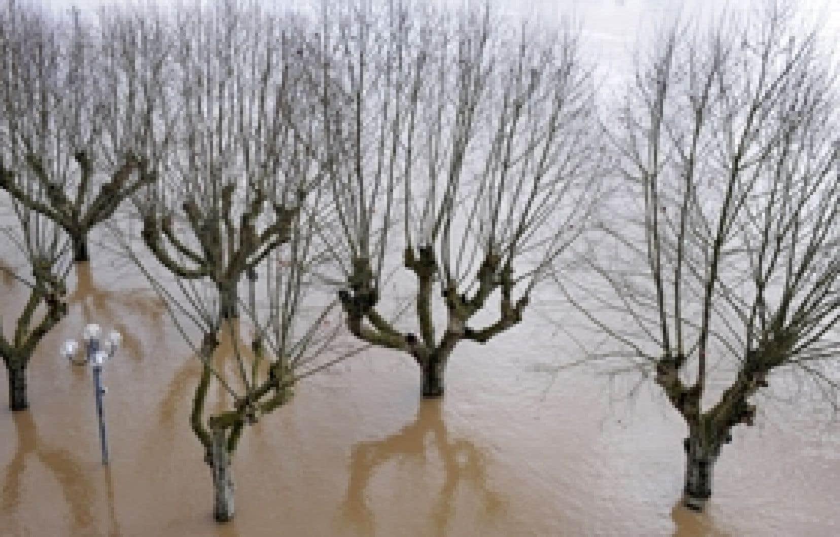 Le pieds dans l'eau! Dans les Landes, la forêt, poumon économique, est ravagée à 60 % ou 70 %, comme ici à La Réole.